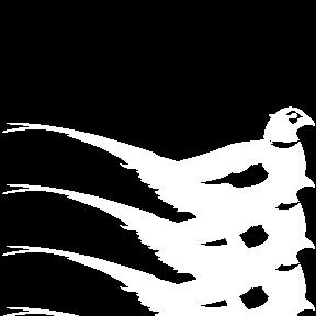 Oiseaux européens